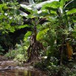 Dschungelcamp Live Stream kostenlos ansehen
